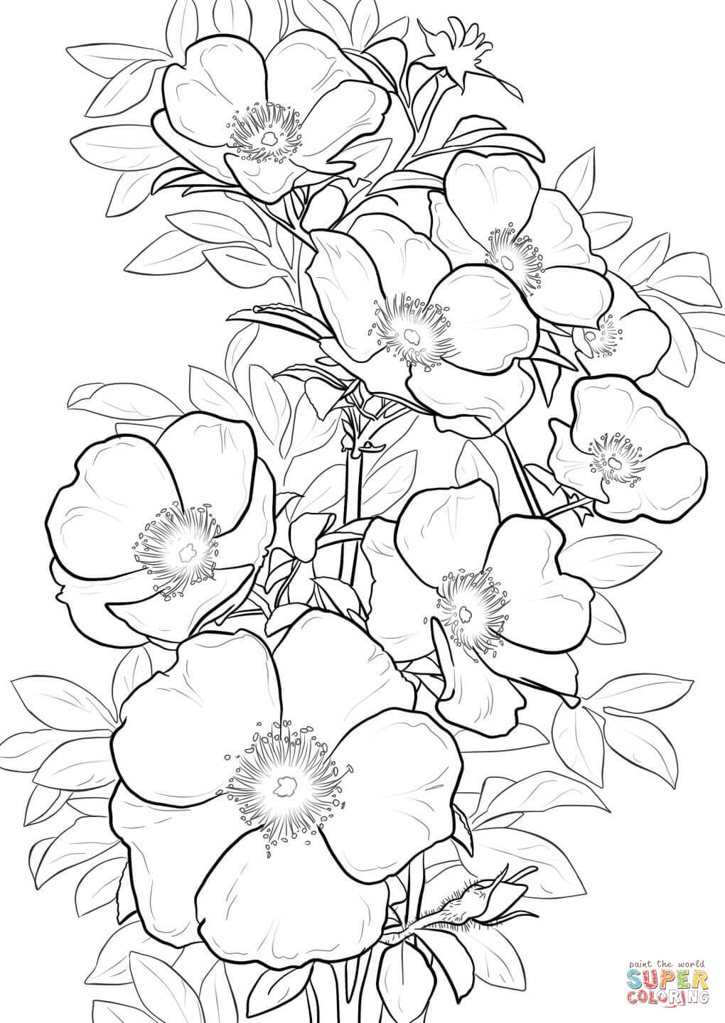 coloring pictures roses coloring pages rose coloring pictures roses