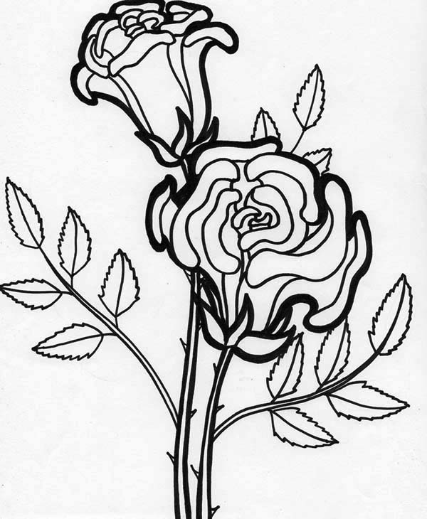 coloring pictures roses rose flower blooming coloring page kids play color coloring pictures roses