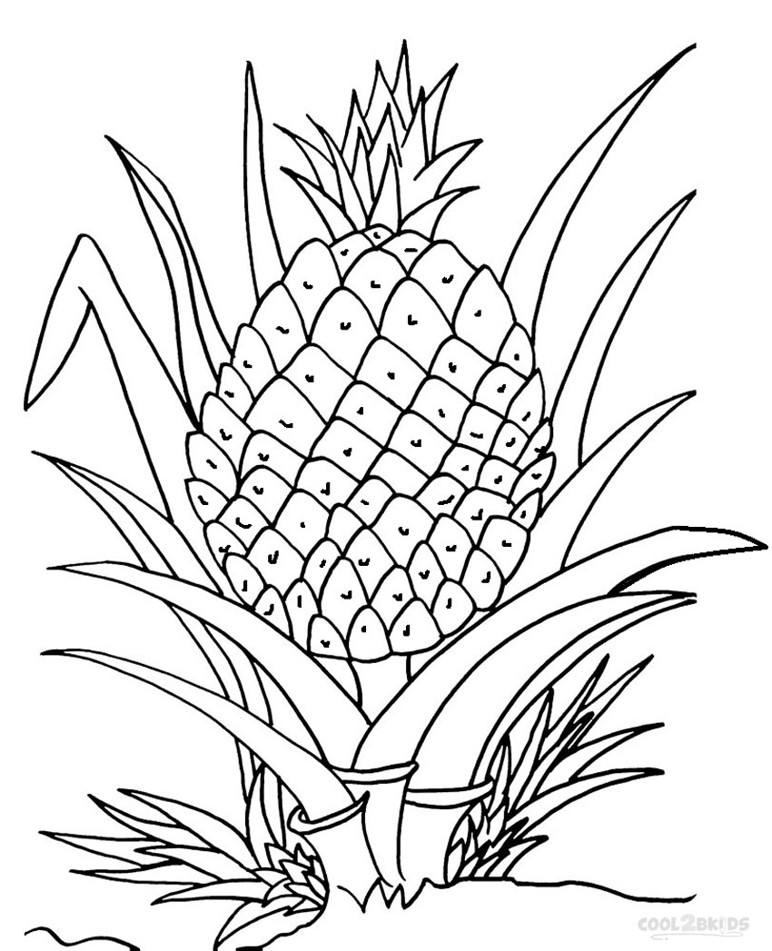 coloring pineapple clipart pineapple drawing at getdrawings free download coloring clipart pineapple 1 1