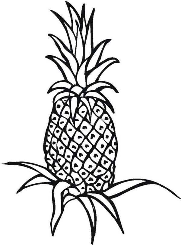 coloring pineapple clipart pineapple plant clipart clipground pineapple clipart coloring