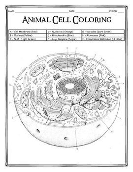 coloring plant and animal cells 30 beautiful cell membrane coloring worksheet in 2020 plant cells and animal coloring