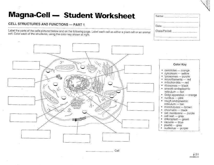coloring plant and animal cells coloring plant and animal cells coloring cells and animal plant