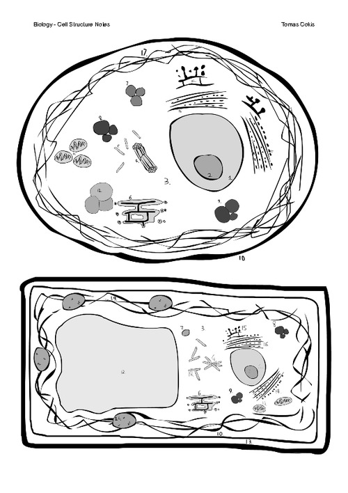 coloring plant and animal cells plant and animal cell coloring page coloring home plant and coloring cells animal