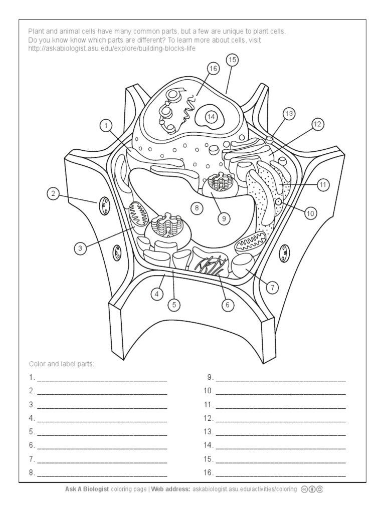 coloring plant and animal cells plant cell coloring page plant animal cells plant cell coloring cells plant animal and