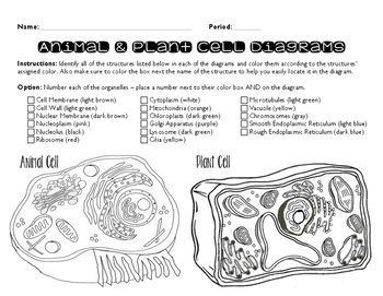 coloring plant and animal cells plant vs animal cell coloring work stuff pinterest animal and cells plant coloring