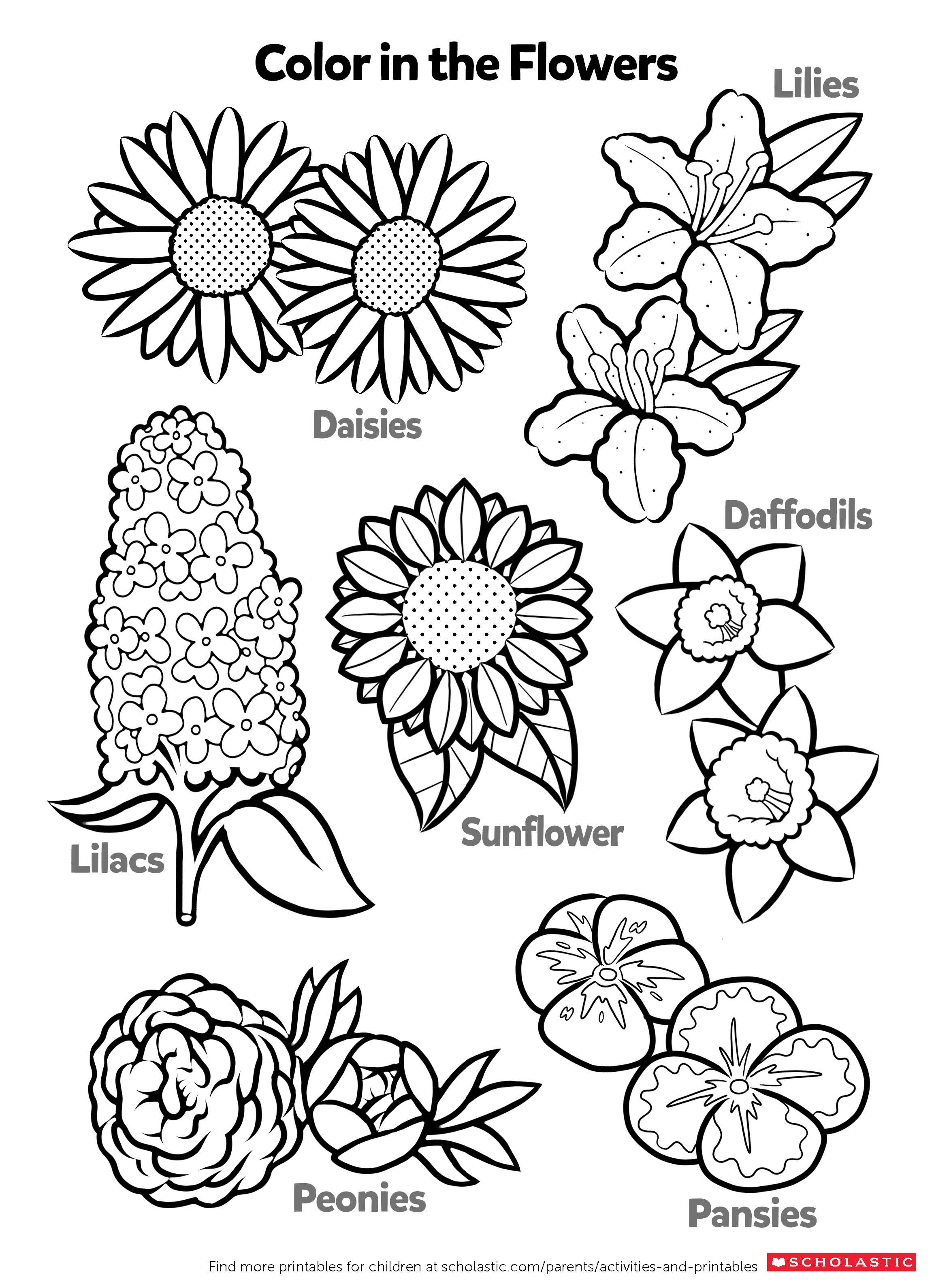 coloring printable learn about flowers by coloring worksheets printables coloring printable