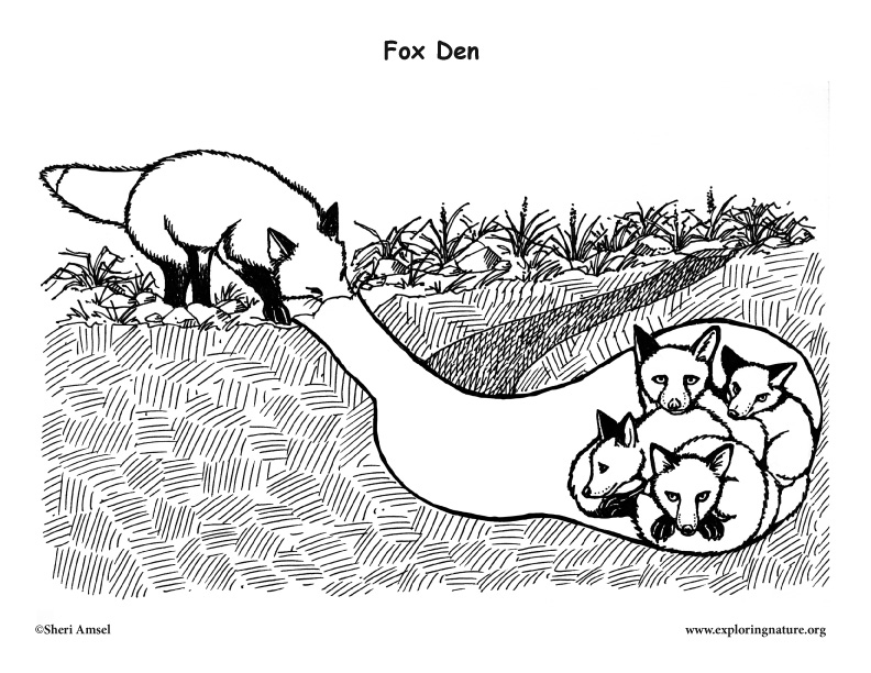 coloring rabbit burrow outline coloring page rabbit and burrow coloring pages rabbit outline coloring burrow