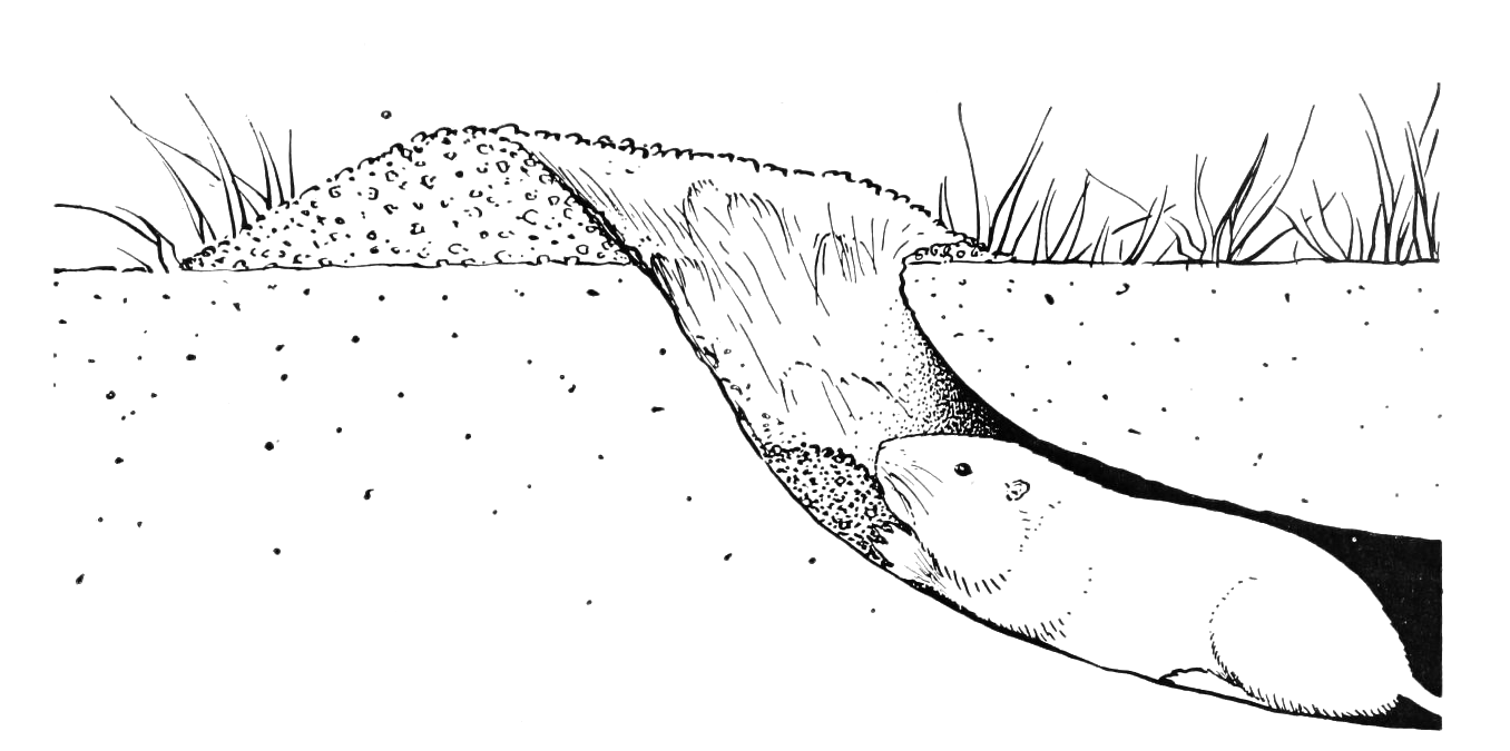 coloring rabbit burrow outline tunnel coloring pages sketch coloring page burrow coloring outline rabbit