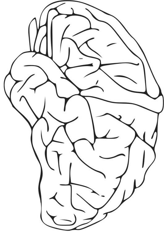 coloring sheet brain coloring page kid corner infant and child studies at the university of page coloring coloring sheet brain