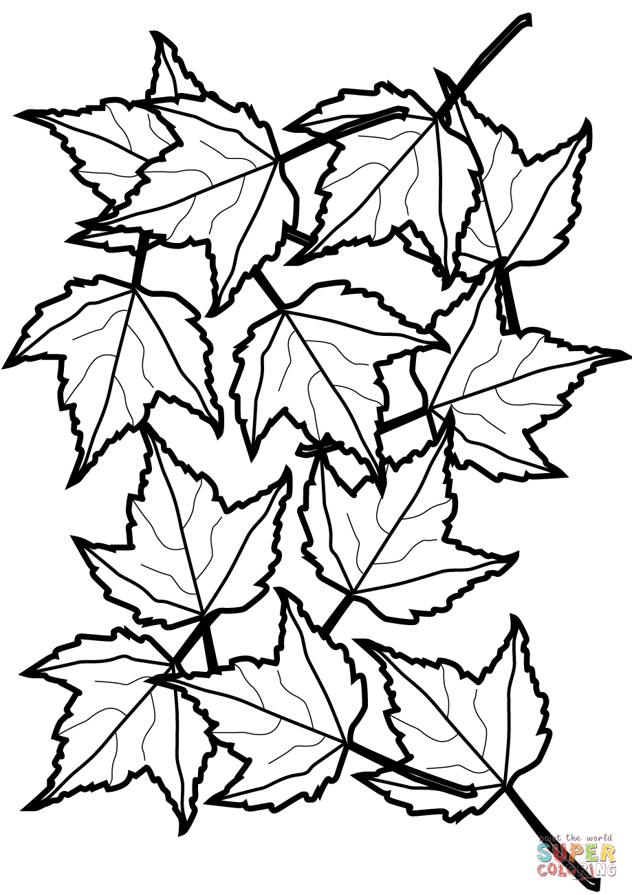 coloring sheet leaves leaf coloring page 13 printable coloring page for kids and coloring sheet leaves