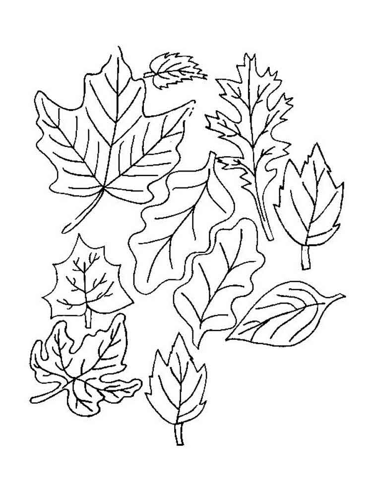 coloring sheet leaves leaf coloring page sheet coloring leaves