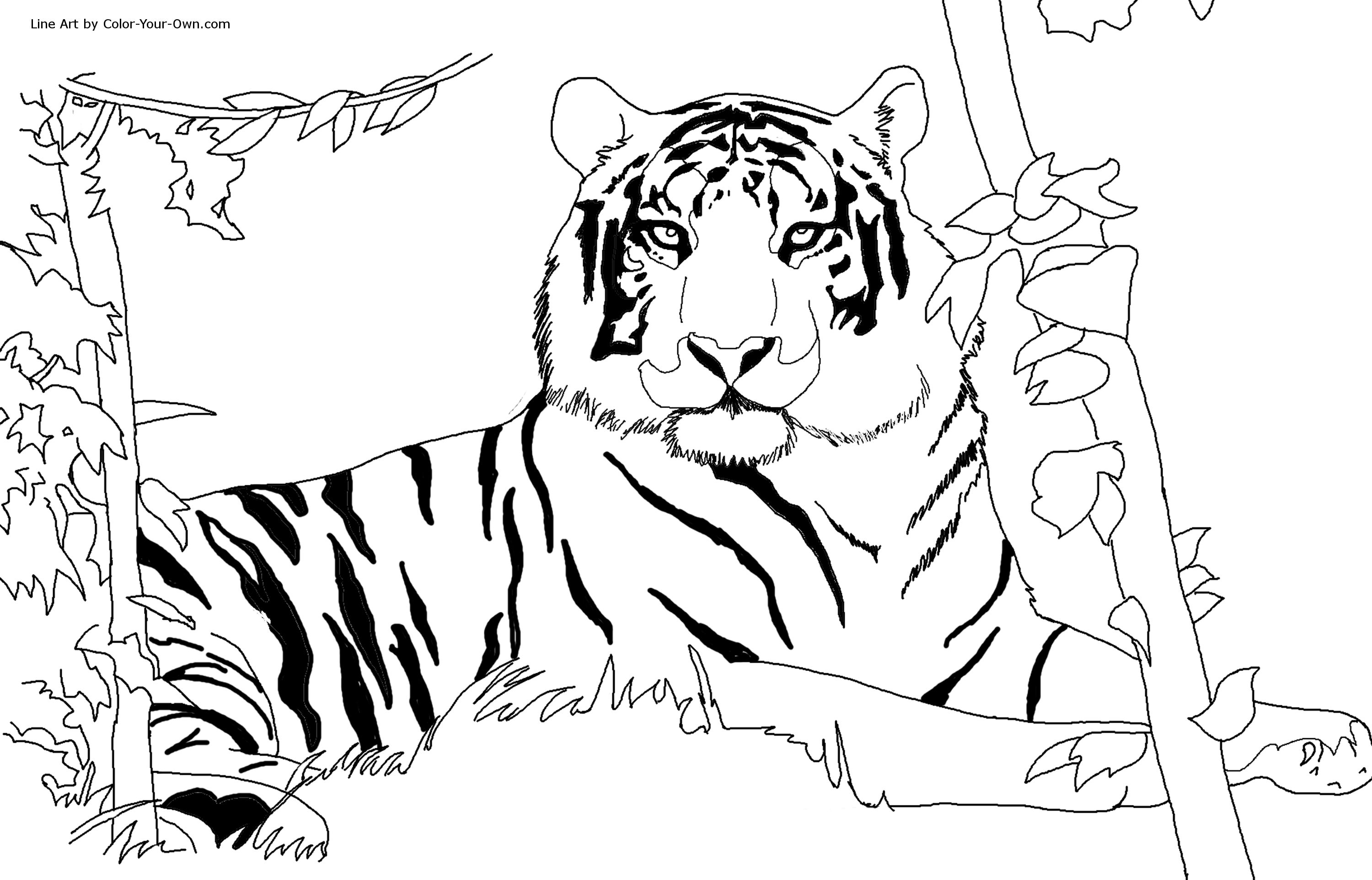 coloring tiger a tiger on guard posture coloring page download print coloring tiger