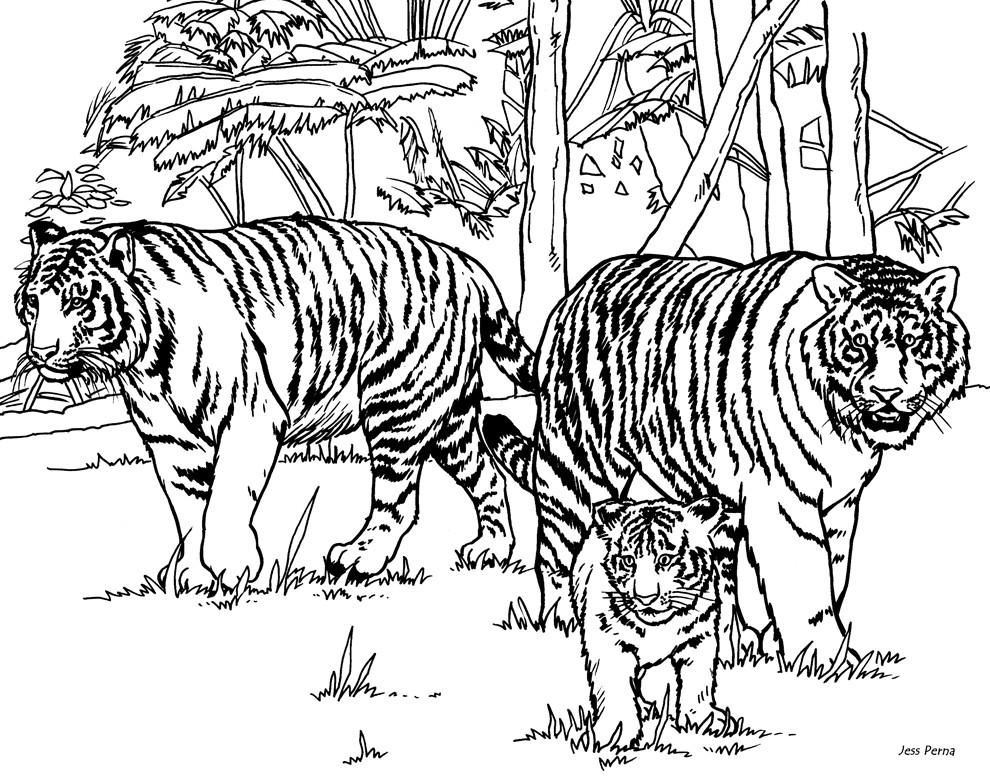 coloring tiger free tiger coloring pages for adults printable to coloring tiger