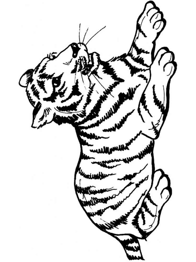 coloring tiger tiger face outline drawing at getdrawings free download coloring tiger