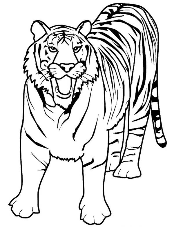 coloring tiger tiger head with patterns tigers adult coloring pages coloring tiger