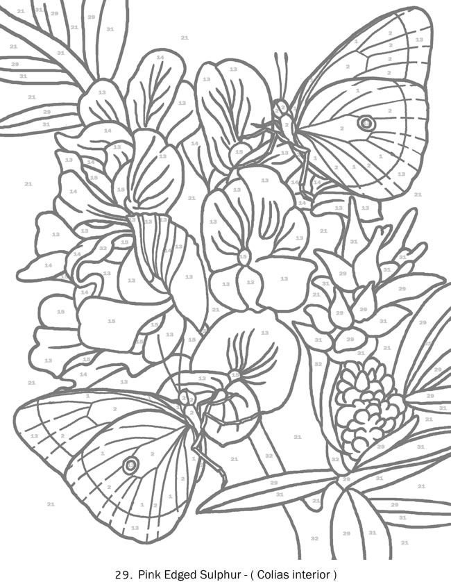 coloring with numbers for adults color by number for adults hard coloring pages printable with numbers for coloring adults