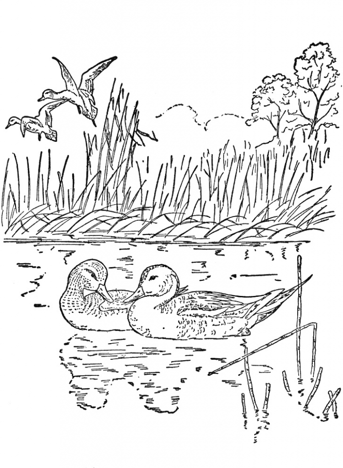 coloring worksheets nature free coloring pages nature scenes at getdrawings free nature coloring worksheets