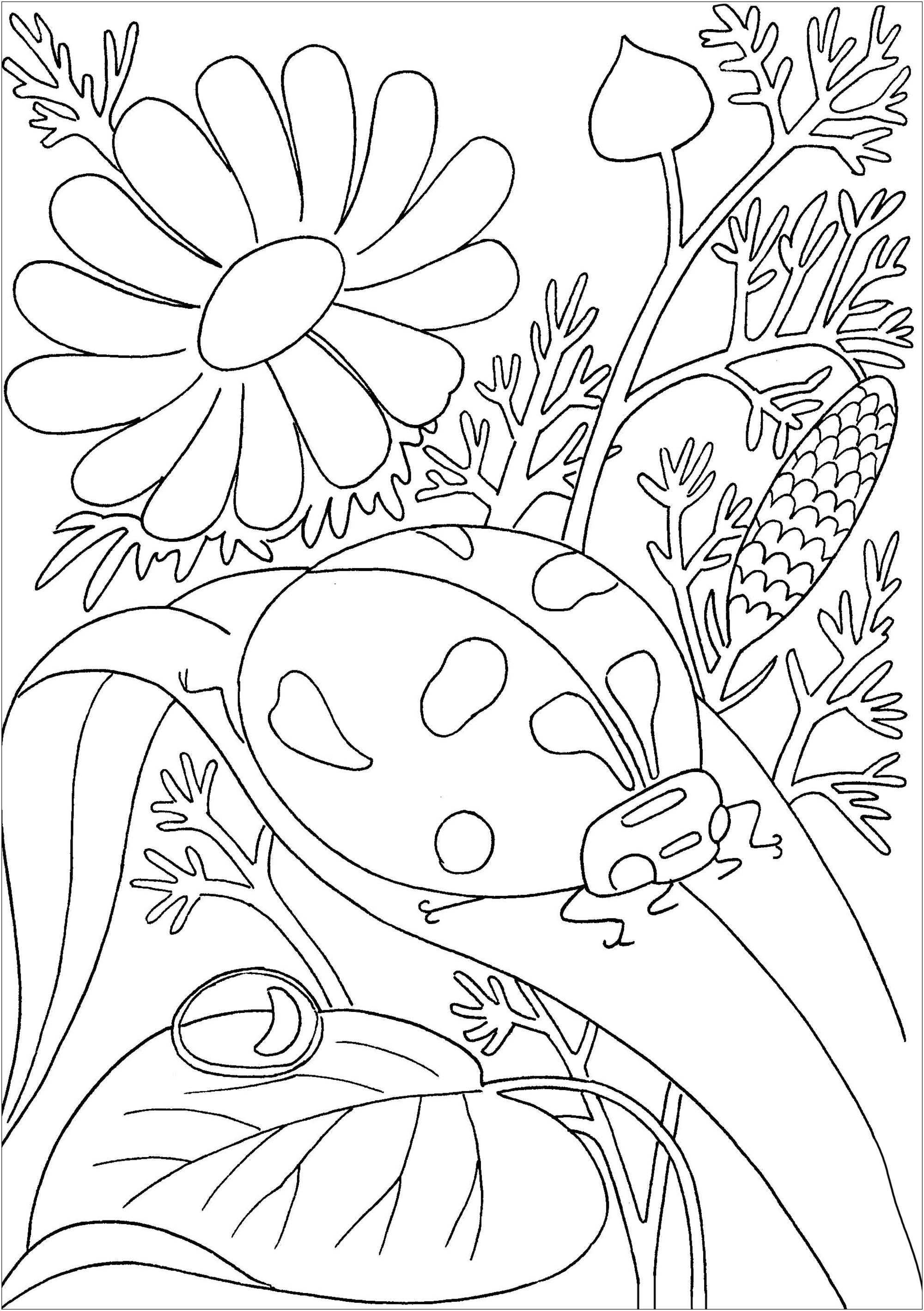 colouring ladybird ladybug on a leave butterflies insects adult coloring colouring ladybird
