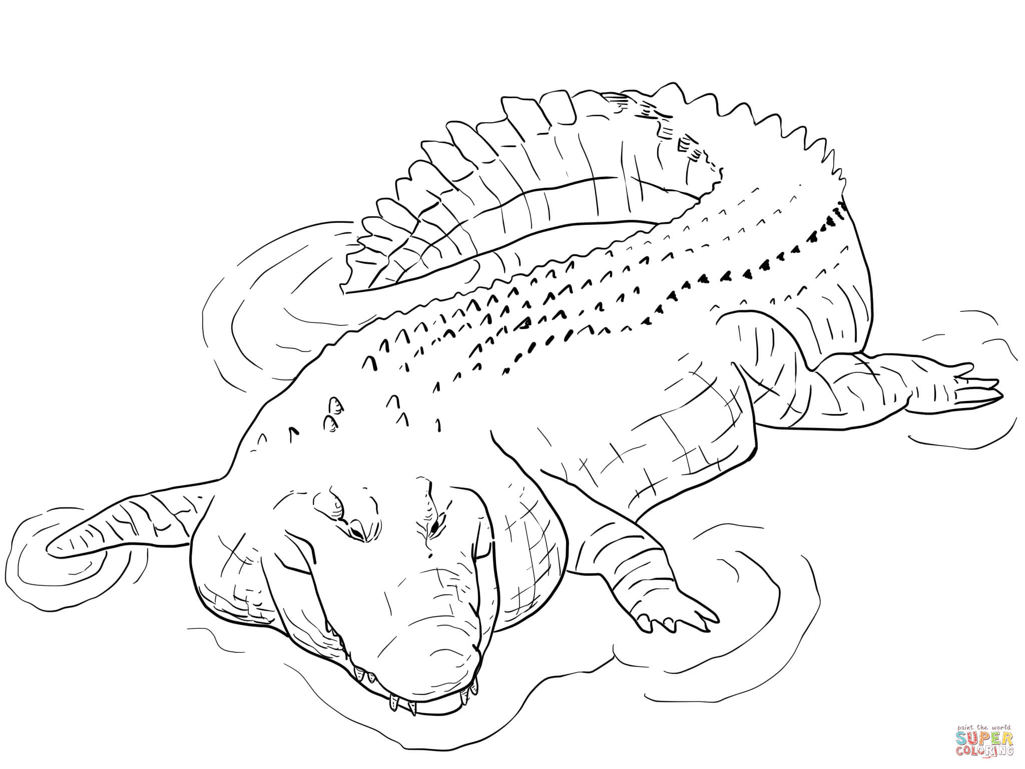 crocodile coloring pages to print alligator coloring page art starts crocodile coloring to pages print