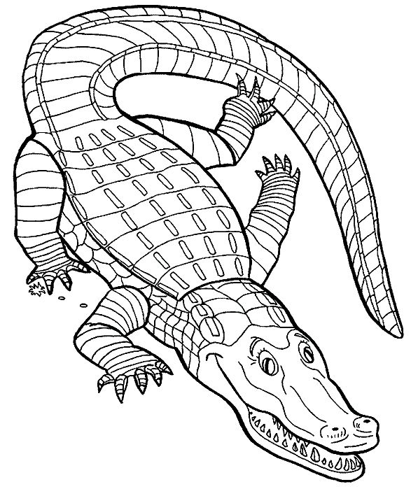 crocodile coloring pages to print crocodile kid free download on clipartmag coloring pages crocodile to print