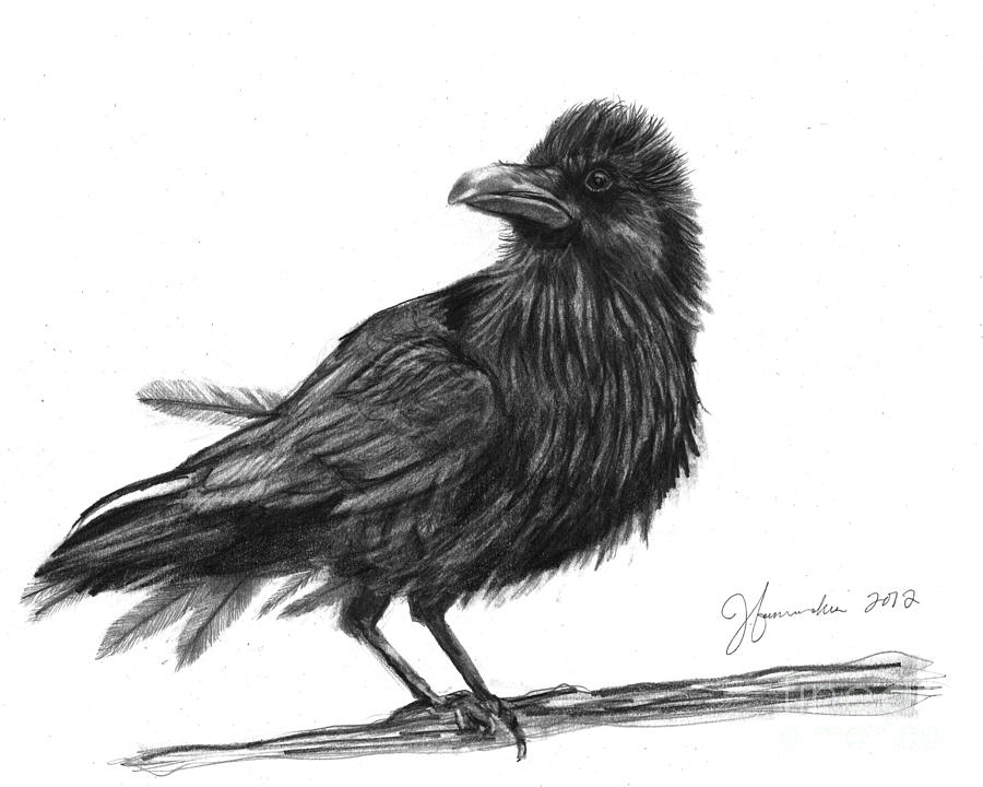 crow drawing crow drawing drawing by steve goad crow drawing
