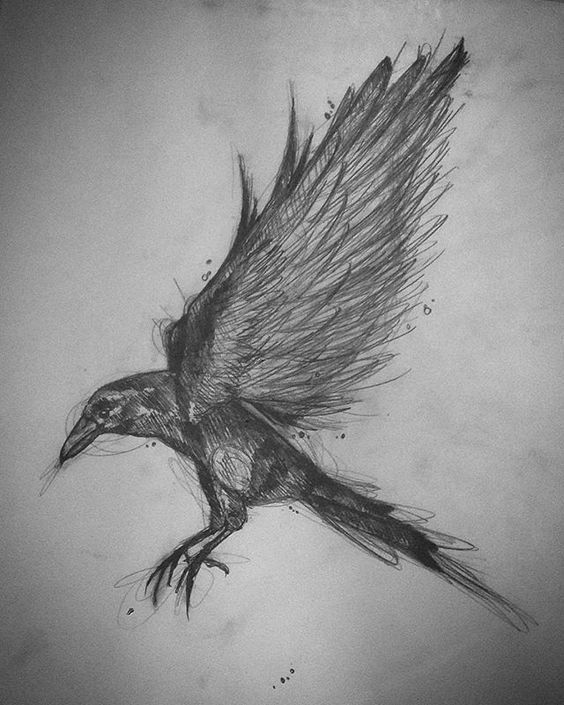 crow drawing crow study drawing by trajan pen and ink drawing crow