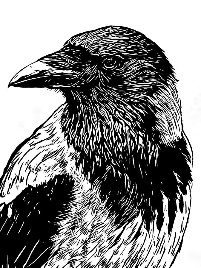 crow drawing crow tattoo images designs crow drawing