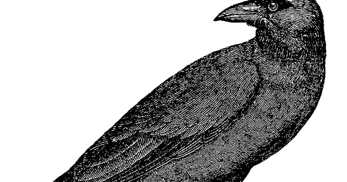 crow drawing how to draw a cartoon crow how to draw cartoons drawing crow