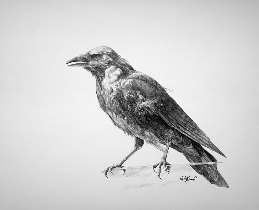 crow drawing how to draw a realistic crow draw crows step by step drawing crow 1 1