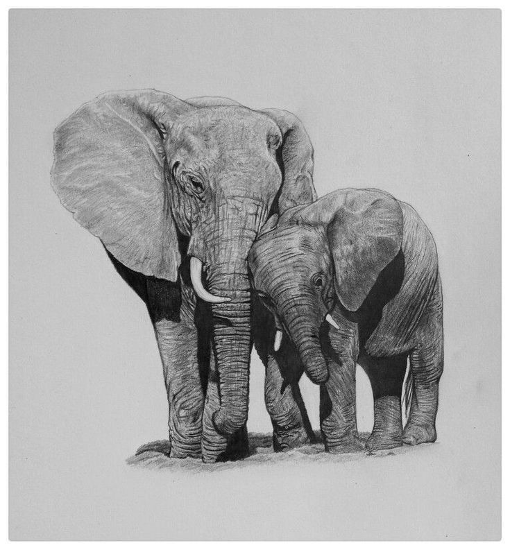 cute elephant drawing 39touching39 a pencil drawing of asian elephants published cute elephant drawing