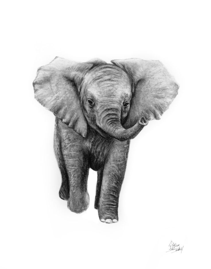 cute elephant drawing baby elephant drawing by karen townsend cute drawing elephant