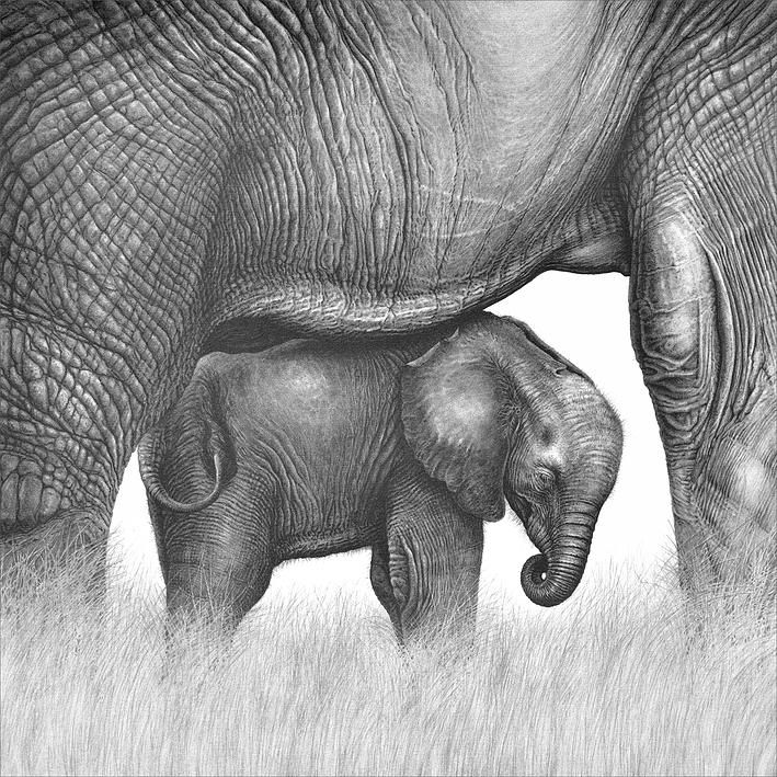 cute elephant drawing cute baby elephant drawing at getdrawings free download drawing elephant cute