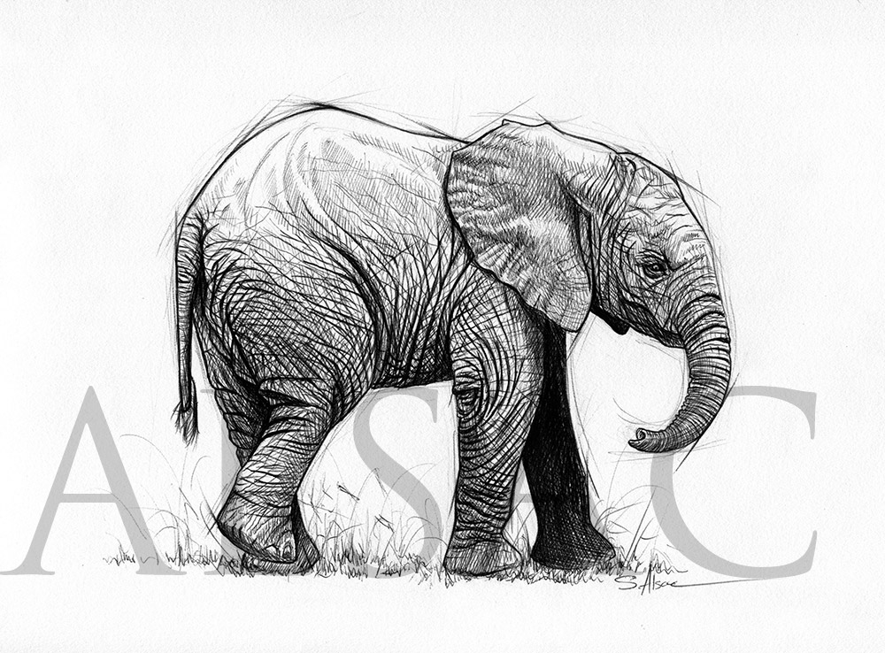 cute elephant drawing cute baby elephant drawing at paintingvalleycom explore drawing cute elephant