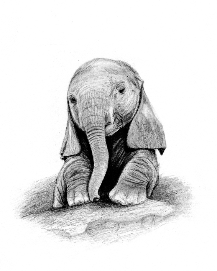 cute elephant drawing quotbaby of minequot graphite drawing i did of one of my drawing elephant cute