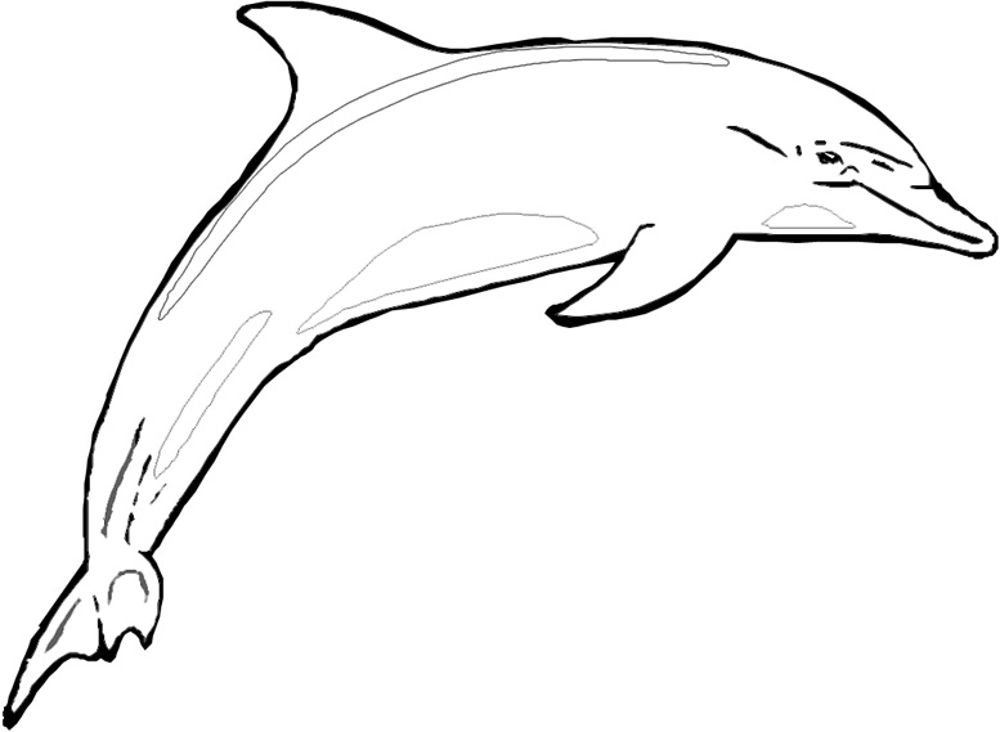 dolphin coloring pictures to print print download my experience of making dolphin pictures dolphin print coloring to