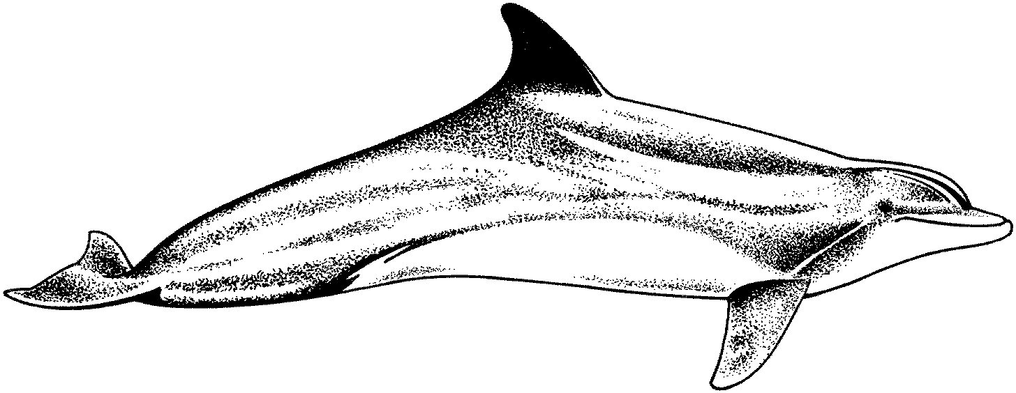 dolphin colouring baby dolphin coloring pages coloring pages to download dolphin colouring