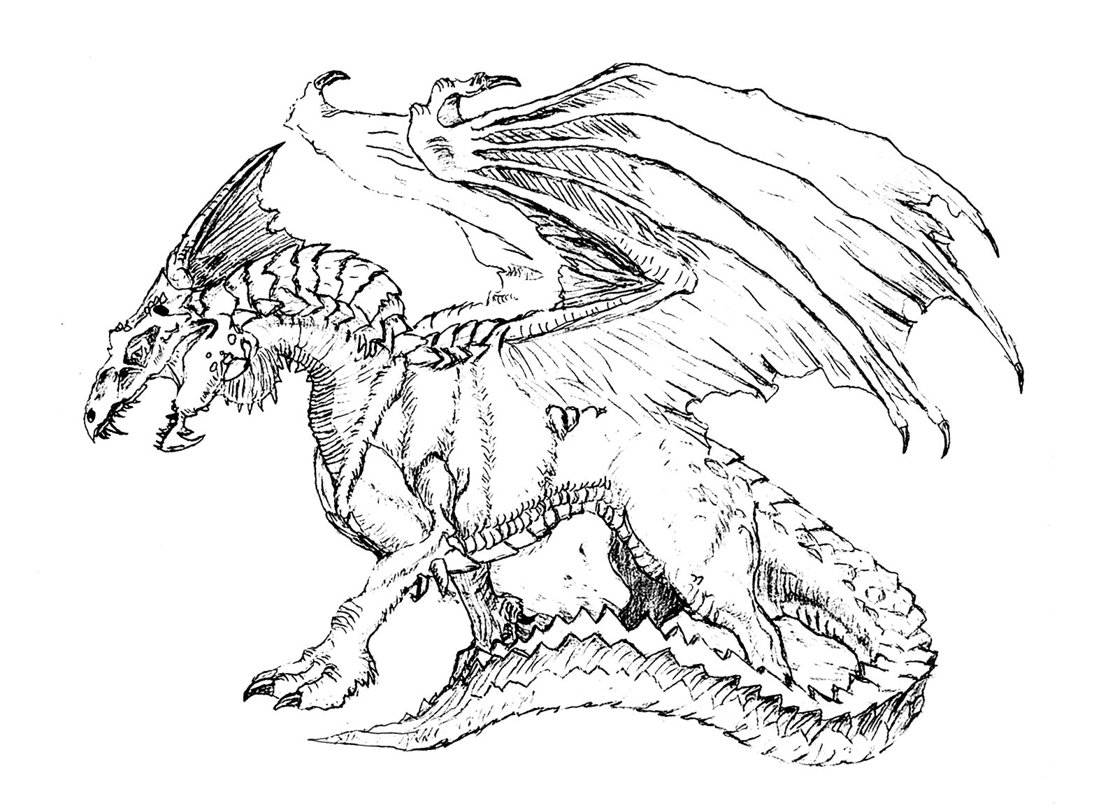 dragon colouring pictures realistic dragon coloring pages for adults adult dragon pictures colouring