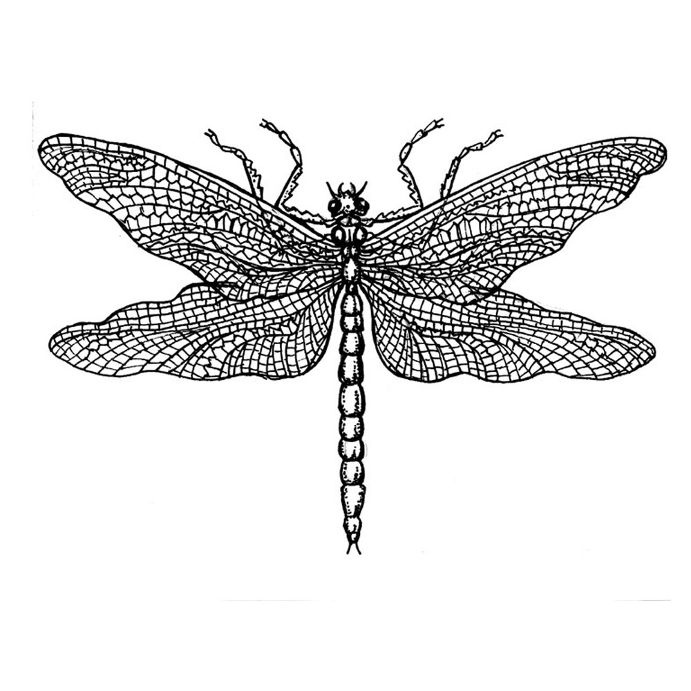 draw dragonfly dragonfly scientific drawing free download on clipartmag draw dragonfly