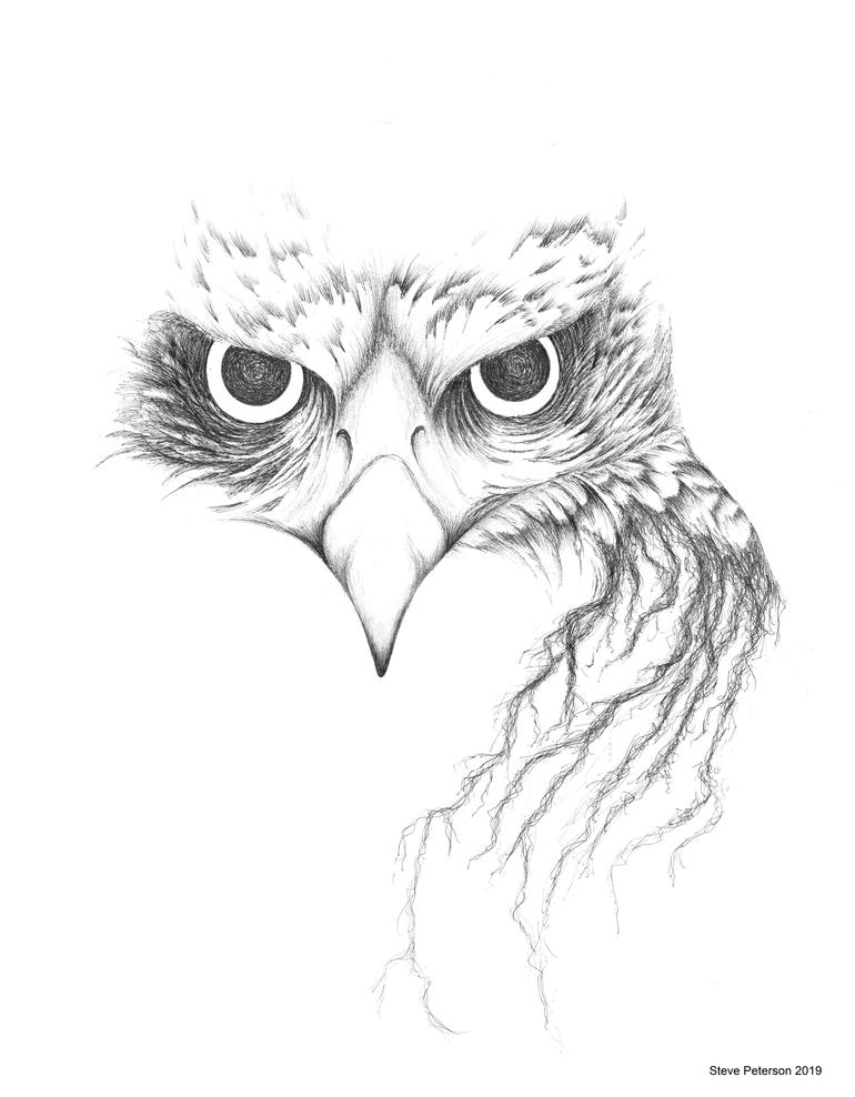 drawing of a hawk red tailed hawk drawing by steve peterson saatchi art drawing of hawk a