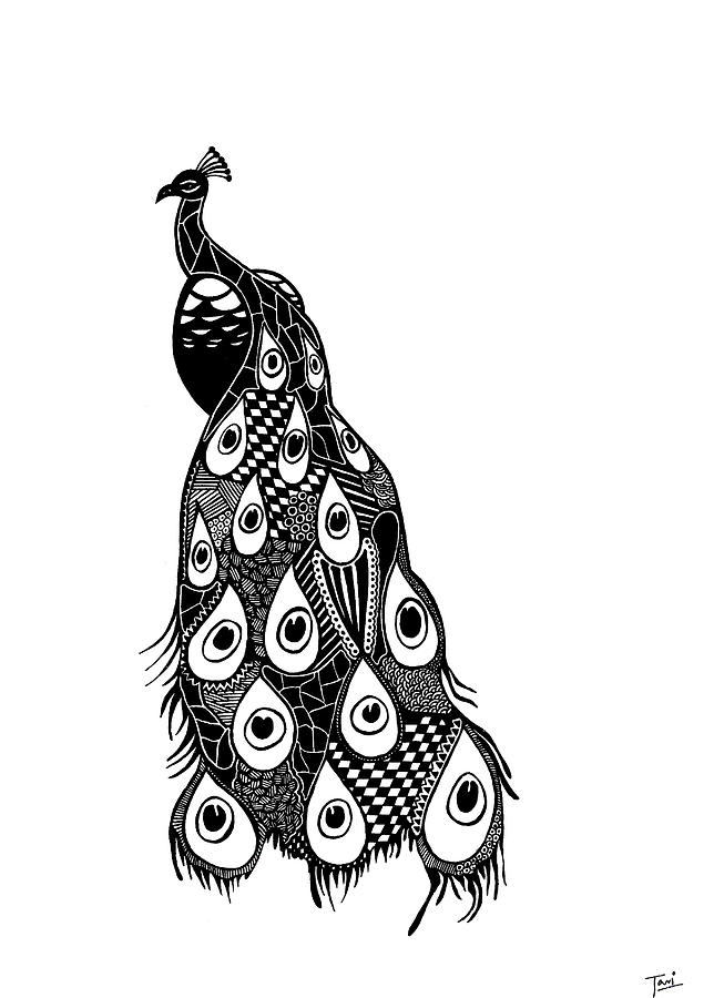 drawing of a peacock 7 best draw more images on pinterest peacock drawing drawing peacock a of