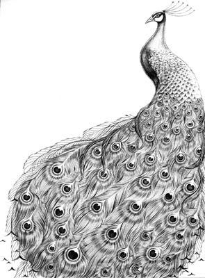 drawing of a peacock how to draw a peacock step by step drawing tutorials drawing of peacock a