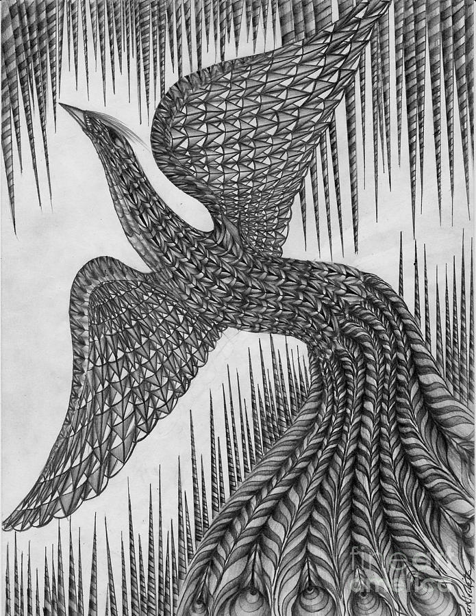 drawing of a peacock peacock black and white drawing at paintingvalleycom drawing a peacock of