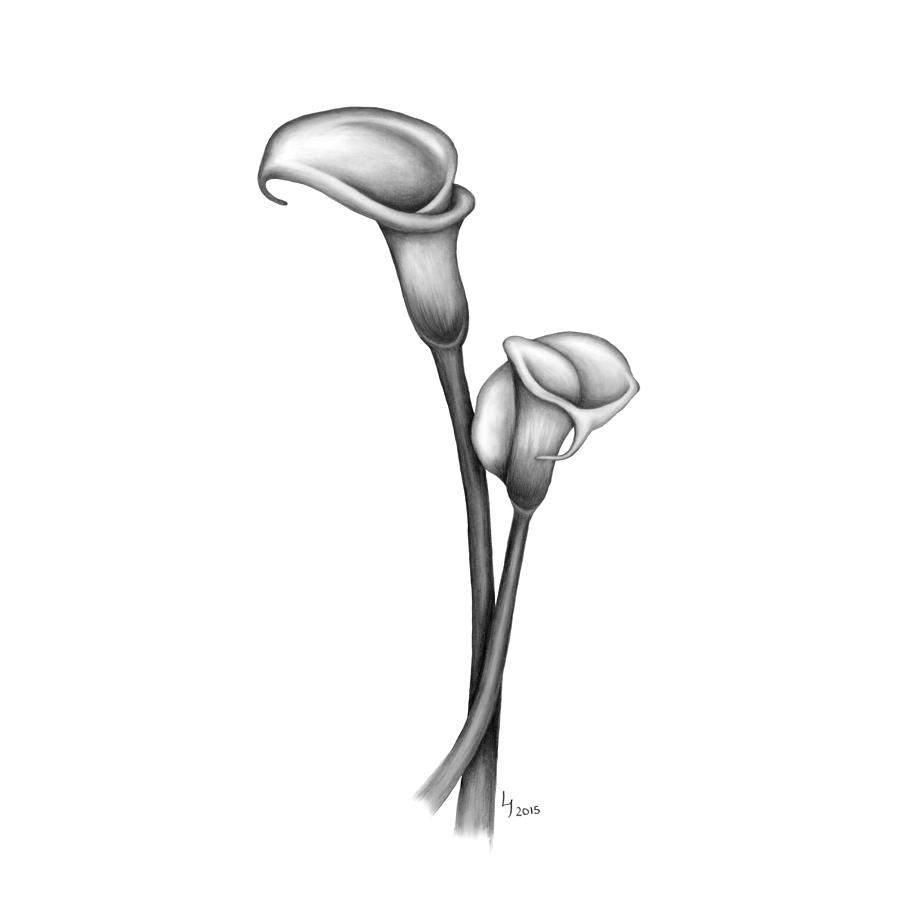 drawings of calla lilies calla lily drawing outline at getdrawings free download drawings of lilies calla