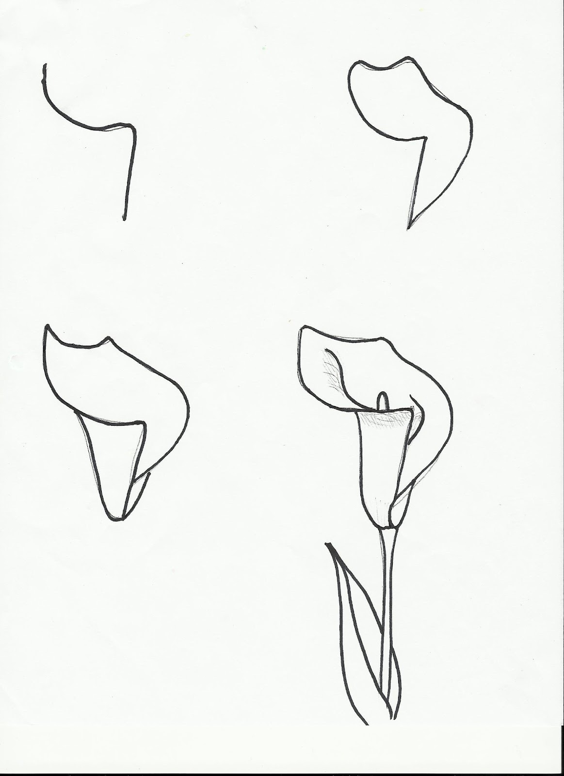 drawings of calla lilies simple calla lily drawing at paintingvalleycom explore of calla lilies drawings