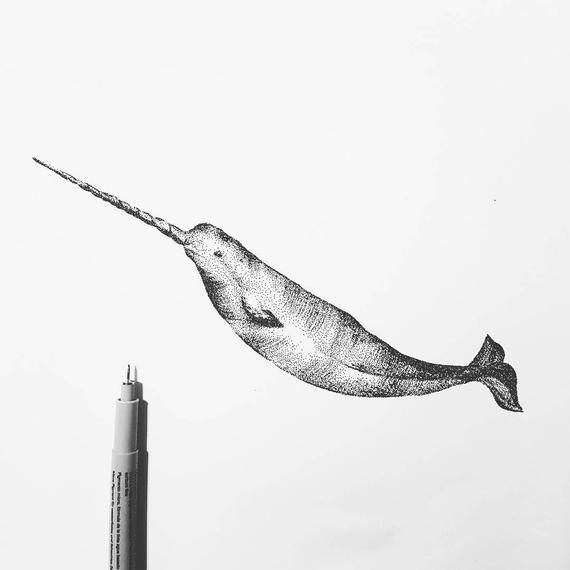 drawings of narwhals narwhal clip art vector images illustrations istock drawings of narwhals