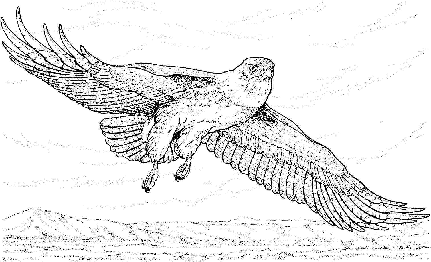 eagle color page bald eagle coloring pages download and print for free page color eagle