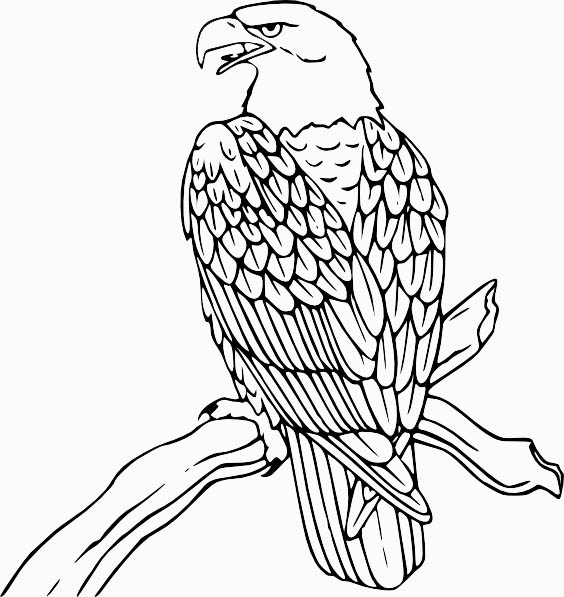 eagle color page eagle coloring pages coloring pages to download and print color eagle page