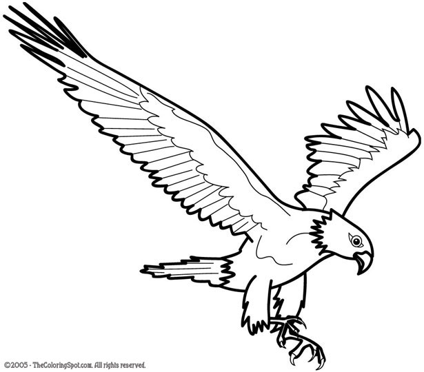 eagle color page eagle coloring pages for adults at getcoloringscom free page color eagle