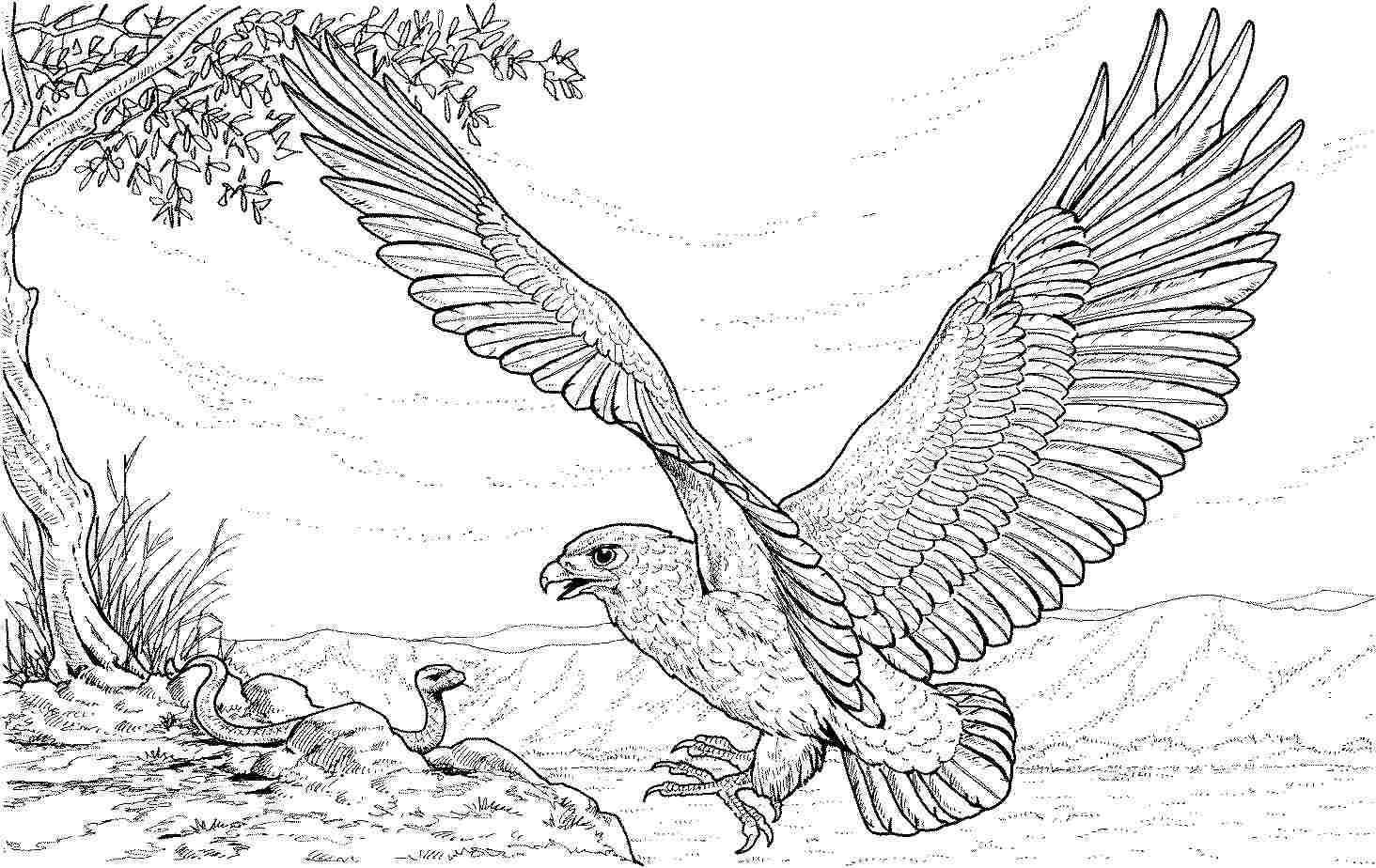 eagle color page eagle coloring pages to download and print for free color eagle page