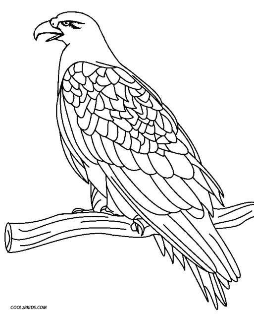 eagle color page eagle flying coloring pages at getcoloringscom free eagle color page
